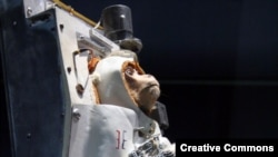 PHOTO GALLERY: Animals -- and monkeys in particular -- have a long history of space travel.