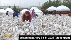 Türkmen TW-sinde görkezilen pagta ýygymy. Arhiw suraty