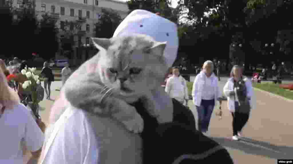 У Мінську літній чоловік на мирний протест приніс кота. Дивіться у відео Радіо Свобода, як цей кіт вирішив вийти на протест та чому він має такий незадоволений вигляд