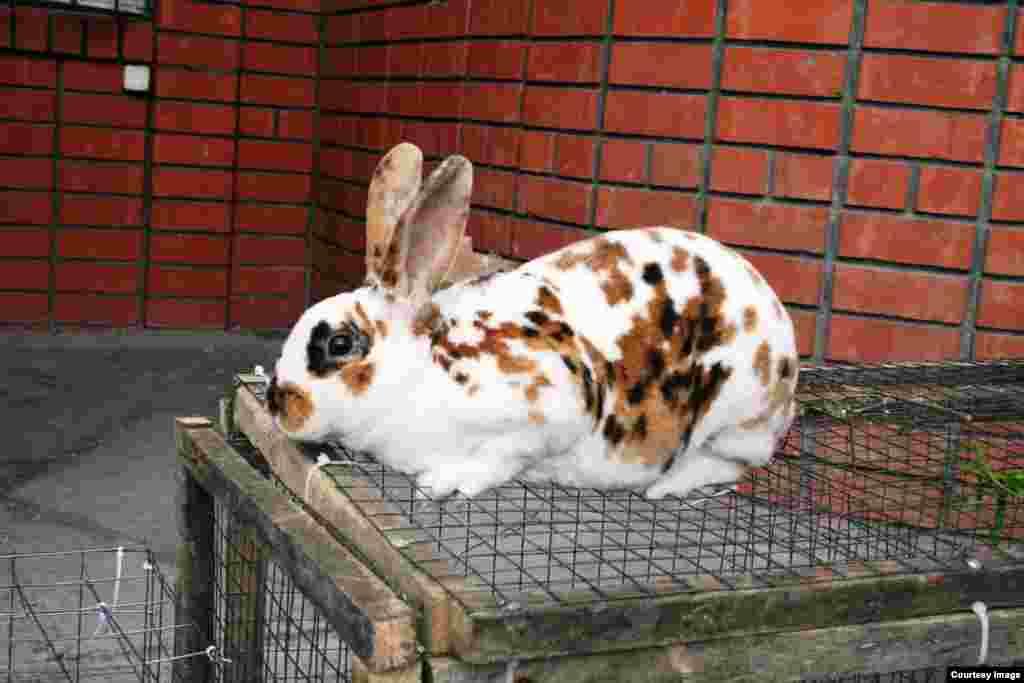 Кролик калифорнийский, голландский, чешский... Выставка-ярмарка длинноухих разных пород открылась в Махачкале.
