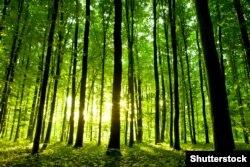 Вирубка лісу може бути законною, але невиправданою, вважають захисники довкілля