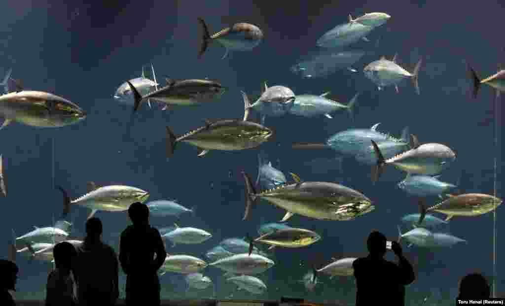 Visitors look at bluefin tuna swimming in a tank at the Tokyo Sea Life Park. (Reuters/Toru Hanai)