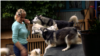 Gruaja nga Prishtina mban 17 qen
