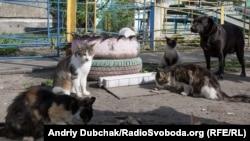 Безпритульні коти і собаки часто зазнають жорстокості від людей