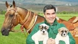 Президентские инициативы и культ собаки в Туркменистане