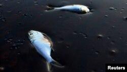 U Meksički zaliv izlilo se više tona nafte, 2010.