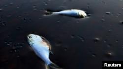 Ekološka katastrofa nastala izlijevanjem nafte u Meksičkom zalivu, 2010.