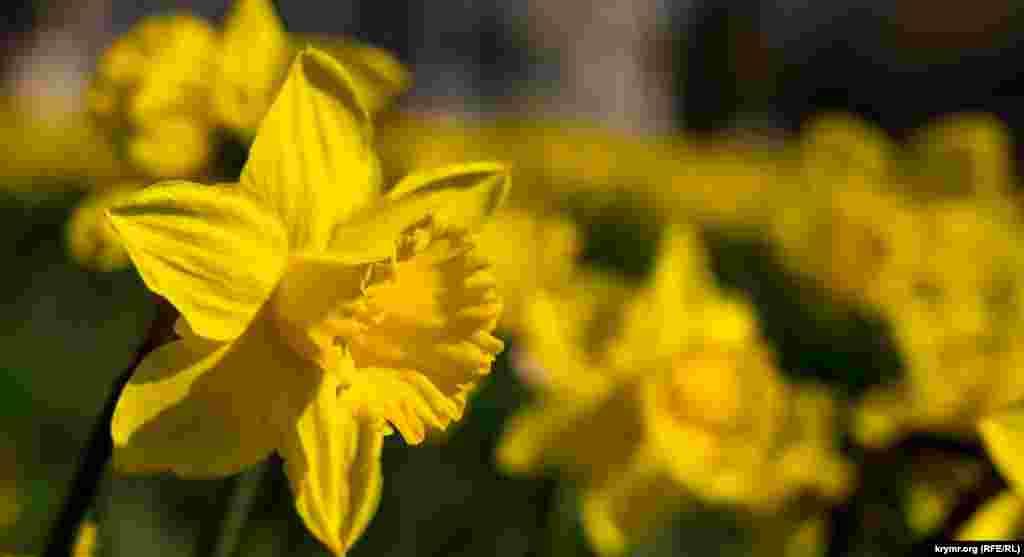 У других сортов – пик цветения