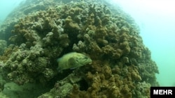 Coral reefs have been hit hard by ocean acidification, warming, as well as fertilizer and chemical runoff.