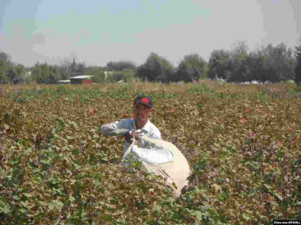 Мигрант, представившийся как Абдигани, несет собранный хлопок к весам.