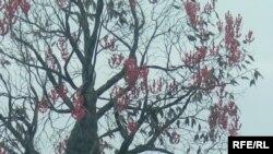 Назарбаевтың Қырғызстандағы ескерткіші. Шолпан-Ата, маусым, 2007 жыл.