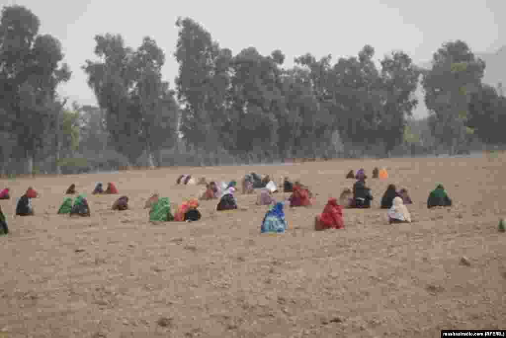 Женщины трудятся на поле.