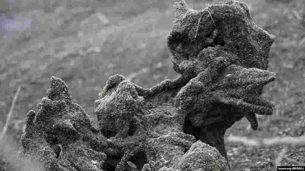 Старые коряги обретают при этом дивные формы