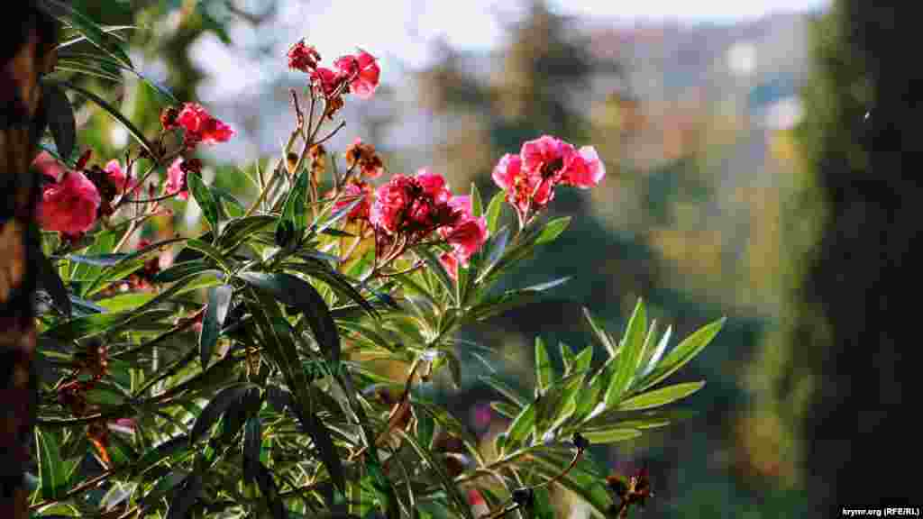 Цветущие экзотические деревья в Воронцовском парке Алупки
