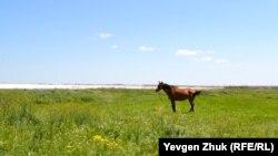 Лошадь пасется на лугу у озера-отстойника