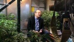 Колишній радник шести президентів США тепер вирощує марихуану
