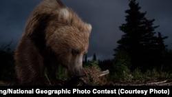 Бурый медведь. Иллюстративное фото.