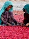 AFGHANISTAN -- Afghan children's sort pomegranate seeds for export in Kandahar, November 26, 2020