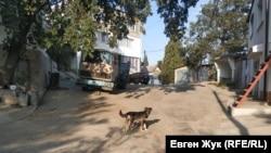 Местный пес остерегается незнакомцев