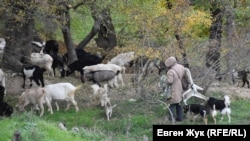 У села Дальнее пасутся козы