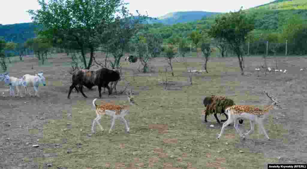 Парк антилоп «Сафари Ранч» раскинулся в живописной Козьей балке. Был создан двумя энтузиастами из Ростова-на-Дону десять лет назад