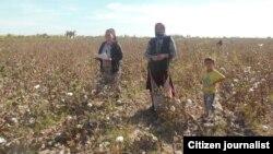 Сборщики хлопка на полях Узбекистана. Фото является иллюстративным и не имеет отношения к данной статье.