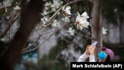 Pekin zooparkı yenidən açılıb, maskalı qadın çiçəkləmiş ağacı çəkir