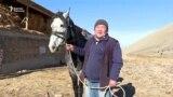 Аргымактарды аргындаштырган Баатыр Тагаев