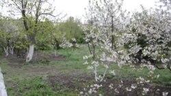 Qırımda ava şaraitleri fenalaştı: aprelniñ ortasında qar yağdı (video)