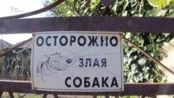 Бесприютная жизнь собак в Абхазии