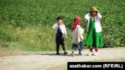 Туркменские дети на хлопковом поле. (Иллюстративное фото)