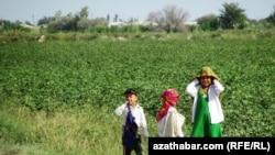 Принудительный труд на хлопковых полях Туркменистана.