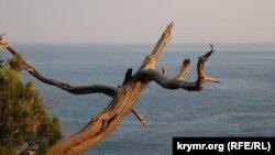 Крим, Новий Світ, архівне фото