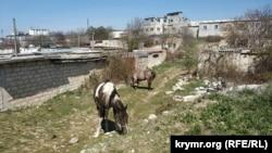 Біля гаражів серед куп сміття щипають травичку коні