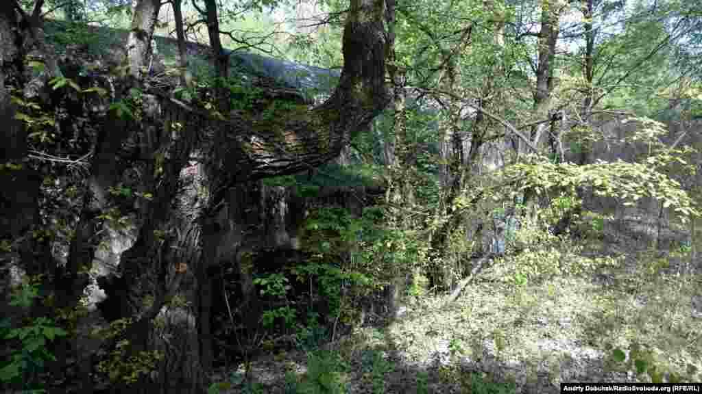 С внешней стороны тоннель настолько зарос, что летом его не видно за деревьями.