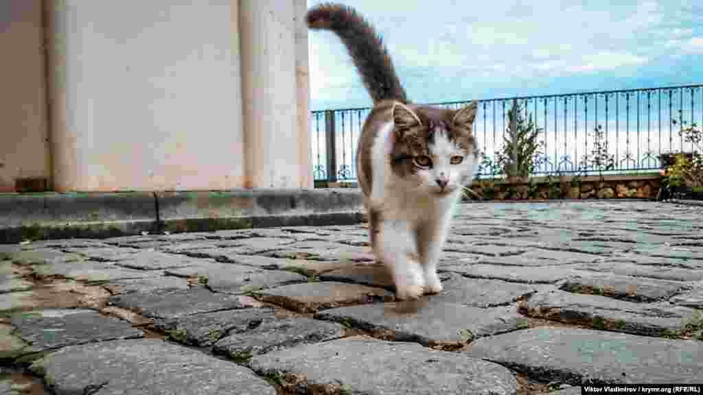 Кішка на території мечеті. В Ісламі тільки цим тваринам доступний вхід в мечеть