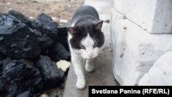 Местный кот, вернувшийся домой только через полгода после пожаров