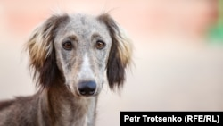 У соцмережах вже кілька днів жартують із ідеї народного обранця розраховуватися собаками за борги