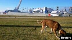 Собака возле Олимпийского стадиона