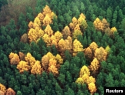 A forest swastika near Berlin, photographed in 2000.