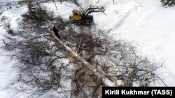 Лесозаготовка в Турочакском районе Алтая, архивное фото