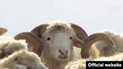 Овцы, козы и кролики будут поедать зелень на платформах