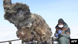 Ученые работают с найденным скелетом самки мамонта. Арктический остров Ляховский, Россия. 13 мая 2013 года.