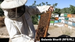 زنبورداری در ولایت بامیان