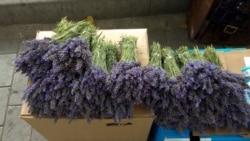 Afaceri care înfloresc frumos: plantele aromatice