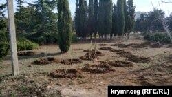 Высаженные деревья и кусты в парке Победы в Севастополе