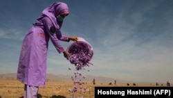 The project, run by a British organization, has made 40 million square meters of agricultural land safe to farm in Herat.