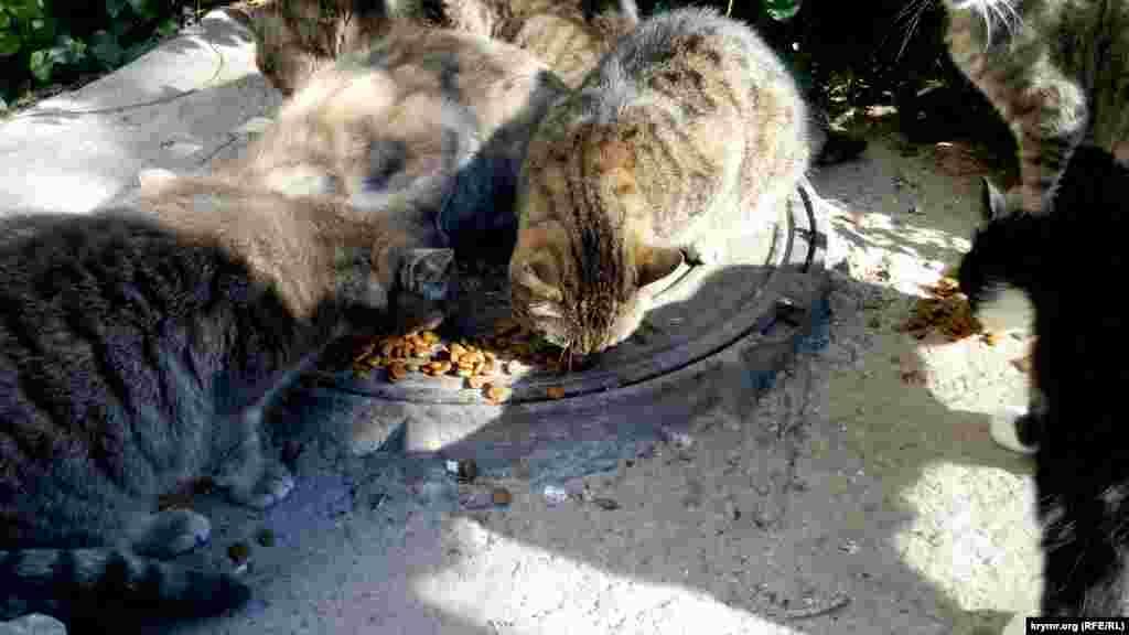 Коты на улицах Севастополя