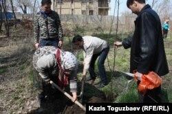Манат Утеулиева, мать убитого эколога Нурлана Утеулиева, и гражданские активисты сажают дерево. Поселок Тастыбулак Алматинской области, 5 апреля 2013 года.