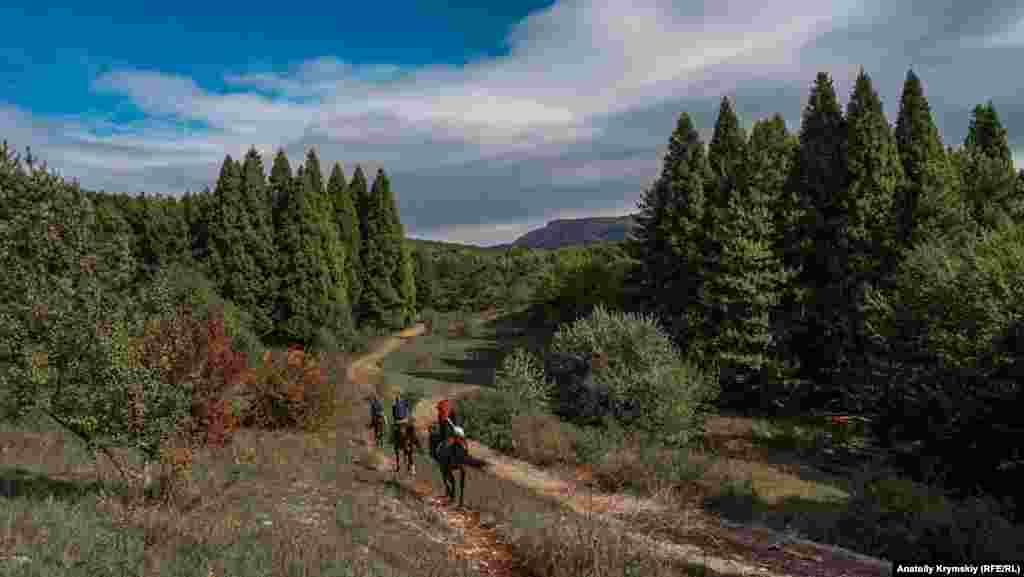 Между двумя участками рощи секвойи пролегает проселочная дорога. Отдельные экземпляры секвойи достигают 110 метров – это одни из самых высоких деревьев в мире